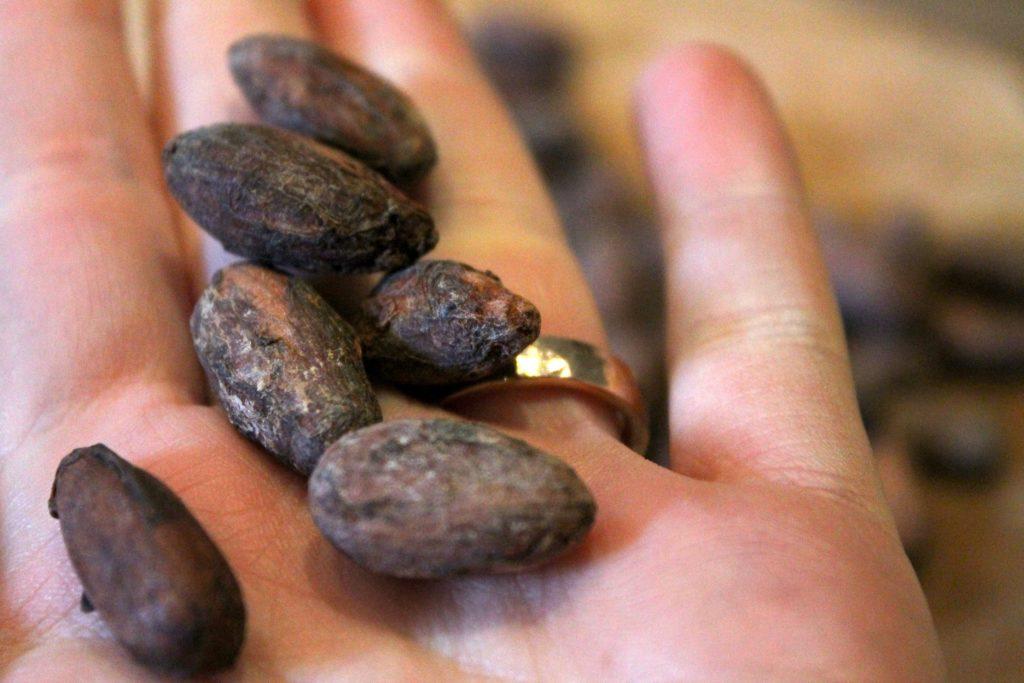 Kakaobohnen - naturbelassen und getrocknet!