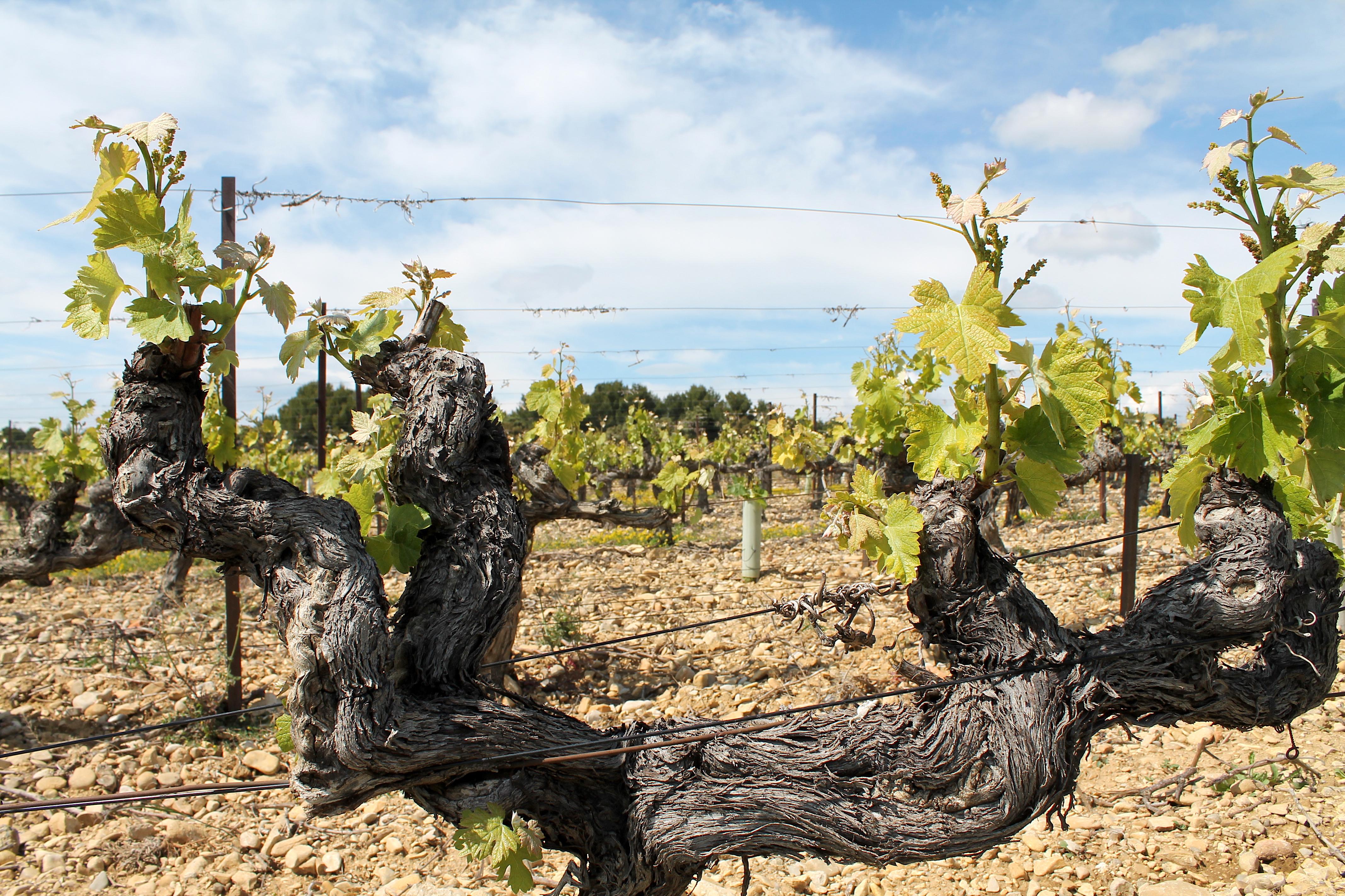 Französischer Wein - Appellation, Villages, Cru...